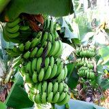 Удобрение смеси порошка аминокислота органическое