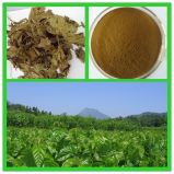 Mulberry Leave Extract for Food and Cosmetics