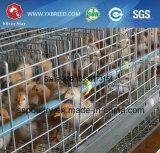 Fournisseur de la Chine de cage de poulet de qualité