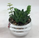 Mini decorazione placcata argento succulente artificiale di formato