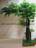 형식 인공적인 벵골 보리수 정원 훈장 Ficus 나무