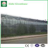 Serre chaude agricole de serre chaude en verre de Venlo à vendre