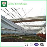 Vehículos/jardín/flores/invernadero multi del vidrio del palmo de la granja