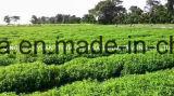 Высокая стабильность станции извлечения Enzymatically изменения Stevia 90% для дрожжи&продуктов