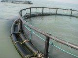Le PEHD/PE/ de la cage de pêche de poissons en cage Deepsea flottante pour la mer Aquaculature