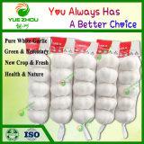 Alimentation de l'ail frais chinois blanc pur avec une qualité optimale