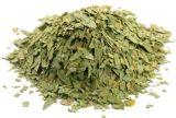 Estratto della polvere di Angustifolia del foglio/cassia della senna di alta qualità con Sennosides