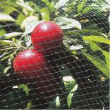 HDPEのプラスチック反鳥のネット、紫外線処置のBirdingの網の保護果樹