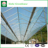 Estufa de vidro do sistema de controlo automático do fabricante de China para a agricultura