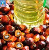 Équipement de transformation de fruits Palm/CPO/Équipement d'huile de palmiste