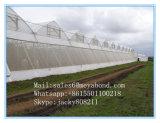 農業の温室の紫外線処置の反昆虫のネット