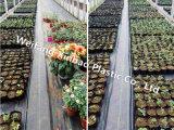 Bloc de mauvaises herbes de serre chiffon avec de la SGS Rapport de test