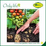 Onlylife glaubte ökonomischem Garten-Pflanzer-Beutel, Beutel Dia24X30cm zu wachsen
