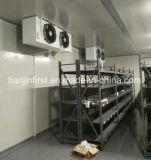 Chambre Froide modulaire pour garder les aliments, de la viande fraîche
