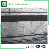 Земледелие/коммерчески парник тоннеля пленки полиэтилена для клубники/Rose
