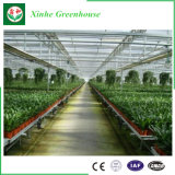 Estufa de vidro da coberta de Venlo Materila da Multi-Extensão da fábrica de China