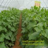 Парник для парника цветка зеленой дома трактира Vegetable