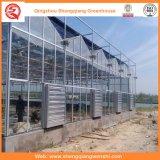 Type de Venlo Chambres vertes de polycarbonate pour la plantation