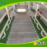 Schwein, das die galvanisierten Bereich-Pflanzenschule-Rahmen säen Bett bewirtschaftet