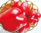 赤いピーマンの種