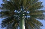 위장 코코넛나무 탑