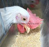 Поголовье станов животного питания подает смеситель для животных питаний