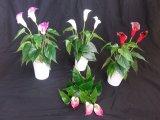 Alta qualidade do lírio de Calla Bush das flores artificiais Gu1495851826503