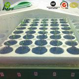 OEM Dienbladen van het Zaad van het Schuim van EVP van het anti-Effect de Veerkrachtige Waterdichte Isolerende Milieuvriendelijke