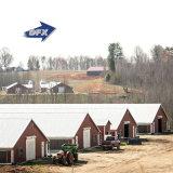 Casa de pollo prefabricada de la estructura de acero de la alta calidad