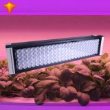 210W LED coltivano lo spettro completo chiaro per le piante d'appartamento Veg ed il fiore