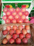 Talla grande fresca Qinguan de papel rojo Apple a Rusia