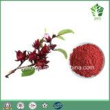 Reiner natürlicher Roselle Auszug: 5:1; 10:1; Polyphenole 50%