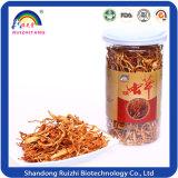Oruga china Cordyceps fungoso Militaris