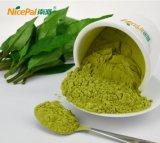 中国の工場からの海南元気な乾燥のカルシウム豊富な野菜粉