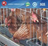 Envase galvanizado caliente del pájaro del acoplamiento de alambre en granjas avícolas
