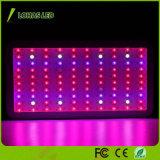 Lo spettro completo LED dell'indicatore luminoso 300W 450W 600W 800W 900W 1000W 1200W della pianta di alto potere LED coltiva l'indicatore luminoso
