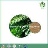 各国用のオリーブ色の葉のエキス20%-40%のOleuropein、Hydroxytyrosol 1%