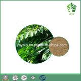 National olive Leaf Extract 20%-40% Oleuropein, Hydroxytyrosol 1%