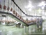 La línea de sacrificio de pollos automático