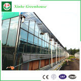 Estufa de vidro para a agricultura