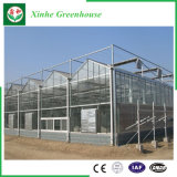 Serre chaude en verre de système hydroponique pour l'agriculture
