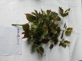 اصطناعيّة معمل وزهرات من يعلّب بوش [كريبر] [139لفس] [إيمغ20151201144626]
