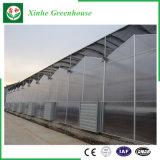 PC Blatt-grünes Haus Pocarbonate Gewächshaus mit Wasserkultursystem