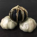 Bom Sabor Alho Negro multiválvula fermentadas (500g/saco) com a FDA