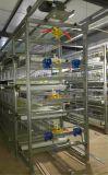 De volledige Automatische Kleine Kooi van het Kuiken voor het Landbouwbedrijf van het Gevogelte (het Frame van het Type van H)