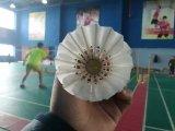 Plume d'oie 3e année Volants de badminton