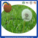 GMP Factory Dandelion Root Extract Capsule