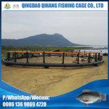 Tilapia-Fische, die mit sich hin- und herbewegendem Fisch-Rahmen anheben