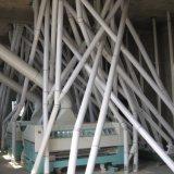Pó do trigo que faz o trigo de trituração da máquina na farinha de trigo