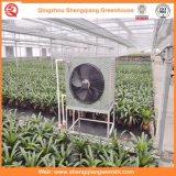 フルーツまたは花のための耕作するか、または庭のマルチスパンのパソコンシートの温室